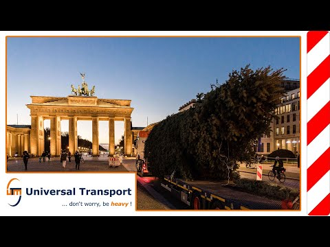 A tree on a long journey - Universal Transport